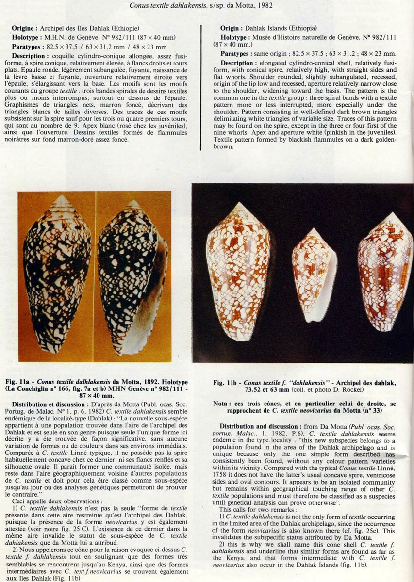 Conus (Cylinder) neovicarius   da Motta, 1982 - Page 2 Conus%20dahlakensis_html_71c643c6